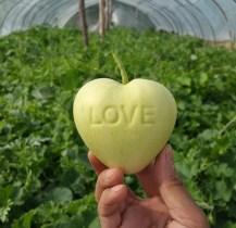 Samo ljubav i jabuka (foto: http://www.fruitmould.com)