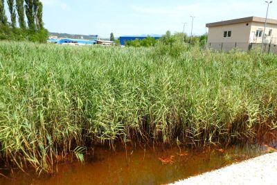 Rijeka Krka, krška ljepotica čiju vodu mutimo: Hoćemo li zaustaviti onečišćenje mazutom, teškim metalima i otpadnim vodama?