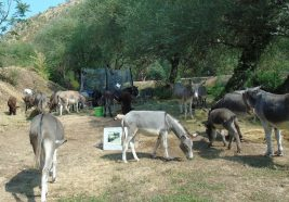 I magarci na FRK-u - foto Facebook)