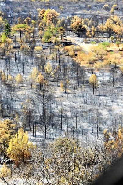 Nestvarni spaljeni pejzaž (foto TRIS/G. Šimac)