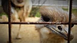 Ptica trkačica (foto TRIS/G. Šimac)