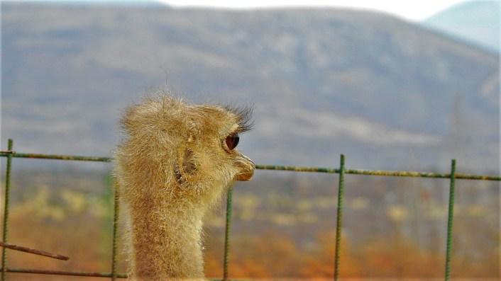 Noj gleda prema daljini (foto TRIS/G. Šimac)