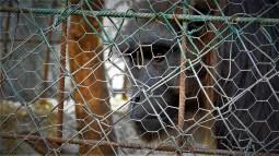 Majmun je odselio (foto TRIS/G. Šimac)