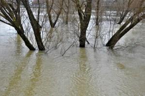 Potopljeni parkovi (foto TRIS/G. Šimac)