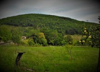 Livada, dunje, jabuke... (foto TRIS/G. Šimac)