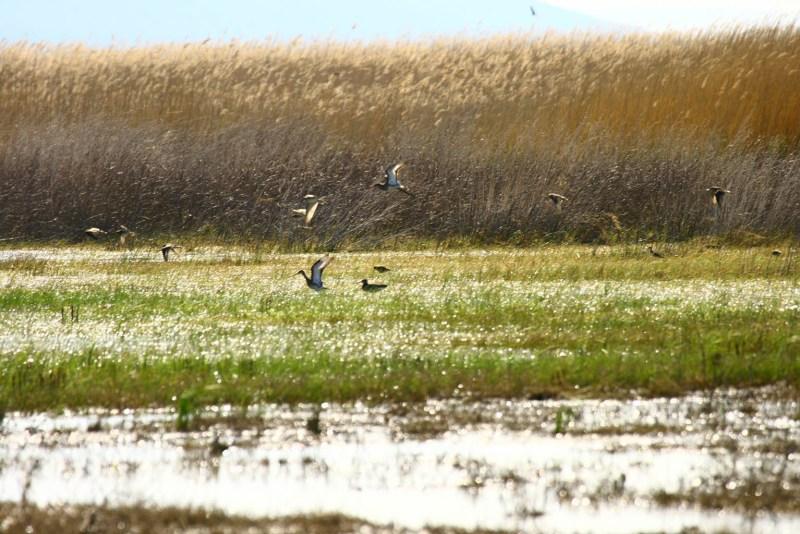 Udruga Biom i PP Vransko jezero: Borba za ugrožene vlažne livade