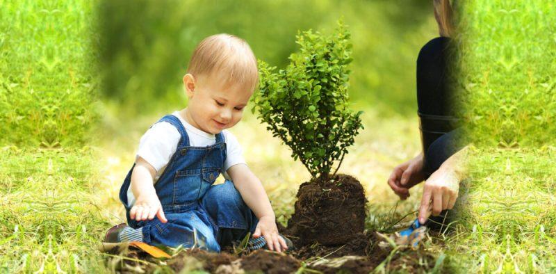 Ilustracija: dječak sadi stablo (foto www,jnf.ca)