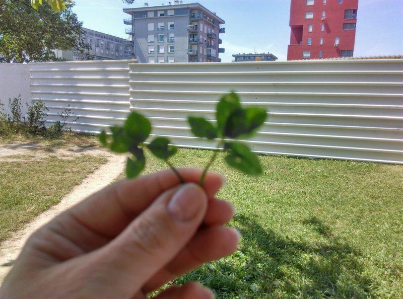 Foto: Građanska inicijativa Zeleni Vrbani