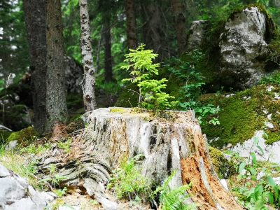 Foto: TRIS/A.Tešić, ilustracija