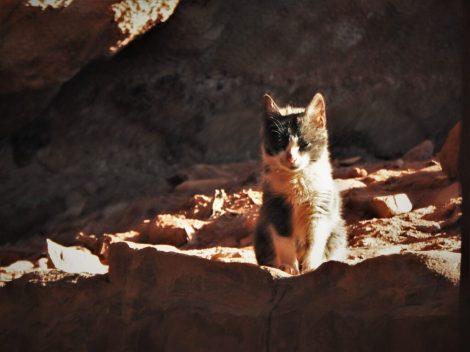 Maca u stijeni (foto TRIS/G. ŠIMAC)