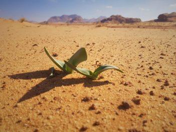 Pustinja nije pusta (foto TRIS/G. ŠIMAC)