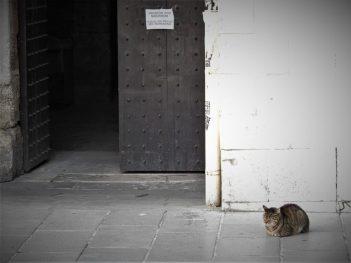 Još jedan mačak u samoizolaciji (foto TRIS/G. Šimac)