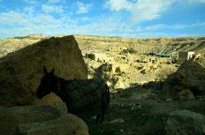 Magarac u selu Dani (foto Joso Gracin)