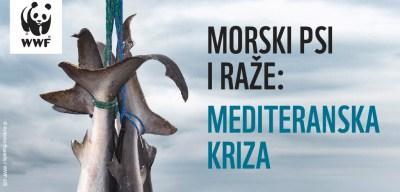 WWFza spas Mediterana: Novi dokazi o ilegalnom ulovu izumirućih morskih pasa, sabljarki, goluba, raža…