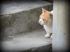 Mačak (foto TRIS/G. Šimac)