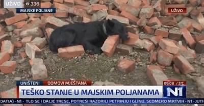 Potresna fotografija. -On čuva kuću. I dalje. Kuću koje više nema. #N1info #potres #MajskePoljane 🎥 Kruno Perković - napisala je na društvenoj mreži novinarka Ivana Dragičević.