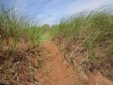 Dunes at the beach on PEI.