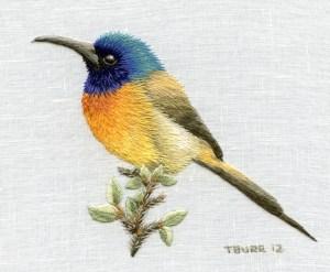 Orange Breasted Sunbird R190