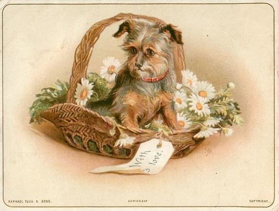 Dog in flower basket