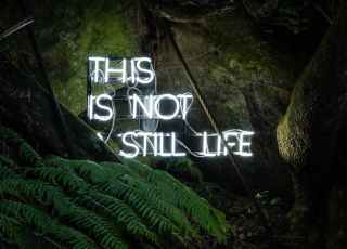 this is not still life sign