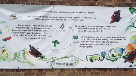 Crop rotation Todmorden