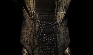 War Elephant (Kruger National Park 2017)