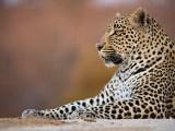 Winter Wonder (Hosana, Sabi Sand Game Reserve, South Africa, 2018)