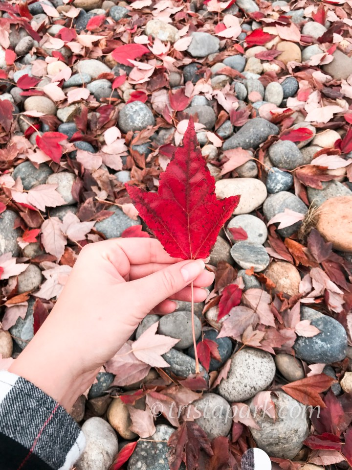 {welcome autumn}