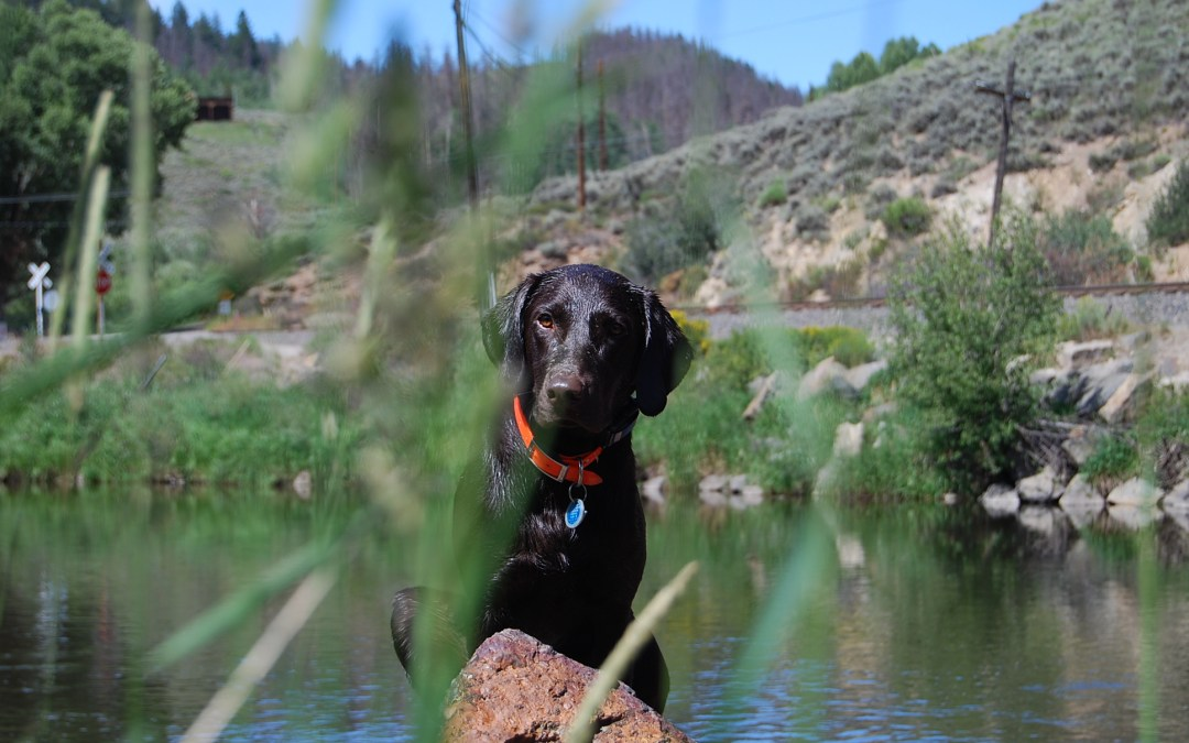 Dog Training for Active Dogs