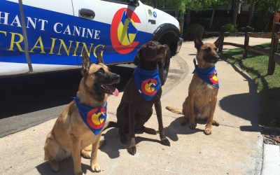 Our CANINE TRAINERS! Sage, Murphy, and Kona