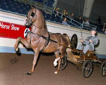 183-3-02-GNharness-058