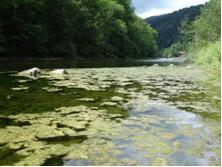Phénomène d'eutrophisation dans le Doubs