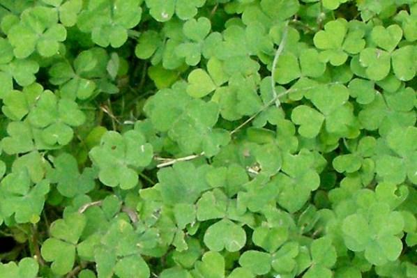 IrishFireside, Flickr