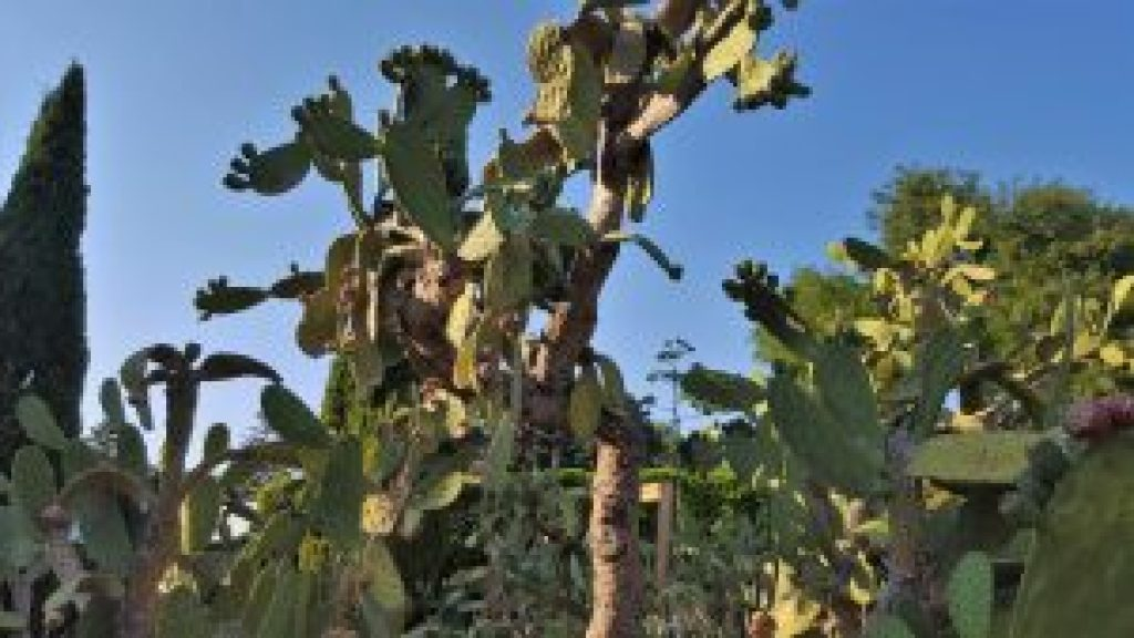 Cactusi la Gradina Botanica - Balcic