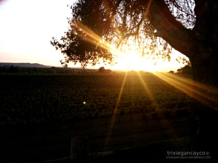 Catalonia-Penedes-Vineyard-Sunset
