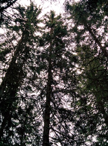 Switzerland-Mürren-Lauterbrunnen-Valley-Trees
