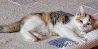 Cincinnatis Best Carpet Restretching Team Can Refresh ...