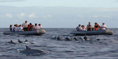 What to Expect on a Dolphin Watching Tour, Kekaha-Waimea, Hawaii