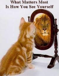 katt spegel