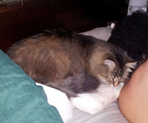 Rolly takes over our pillows