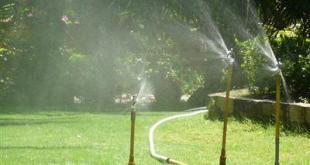 Cây cảnh nên được tưới nước thường xuyên