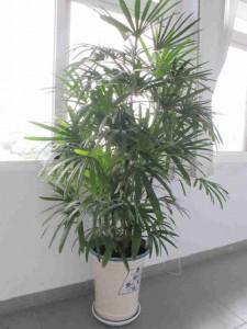 7 lưu ý khi trồng cây nội thất trong nhà