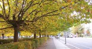Màu xanh của cây cối tạo hiệu ứng tâm lý đặc biệt