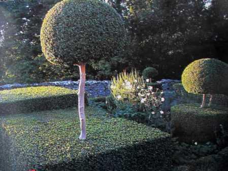 Những loại cây xanh quanh năm có thể cho quá nhiều bóng tối, nhưng khi được cắt xén theo những hình dạng bậc thang và cung tròn thì chúng tạo sự cần bằng về ánh sáng và bóng tối.