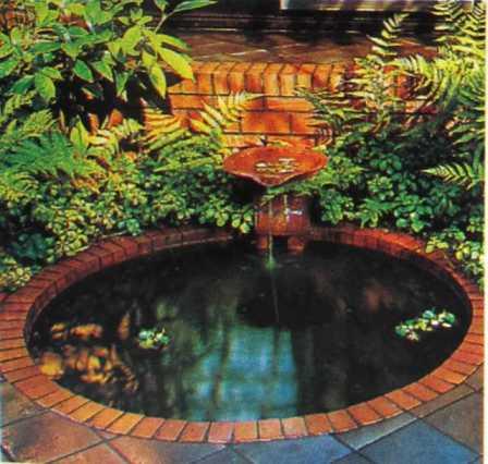 Nước sẽ cung cấp nhiều ánh sáng hơn và dương xỉ trồng gần nước để tạo ra sự cản bàng