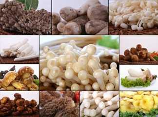 Nấm ăn