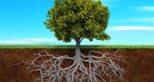 Tính trạng rễ cây