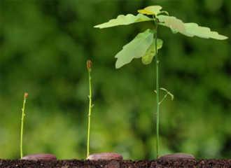 cây trồng - Ảnh minh họa
