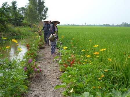 Mô hình công nghệ sinh thái trên ruộng lúa