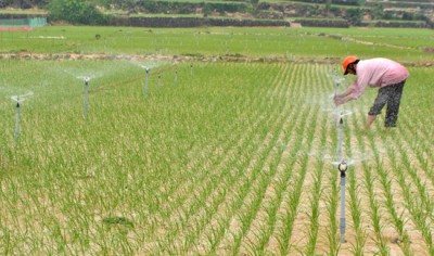 Công nghệ phun tưới tự động giúp nông dân tiết kiệm được rất nhiều thời gian, công sức và chi phí.